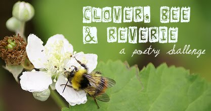 Cloverbeereverie
