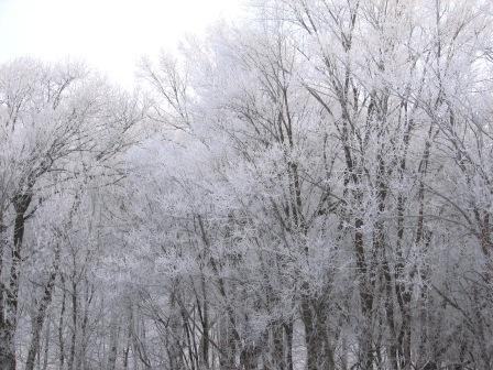 Winter lace 2