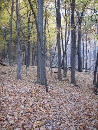 Rta leaves