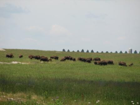 Blue mounds sp bison